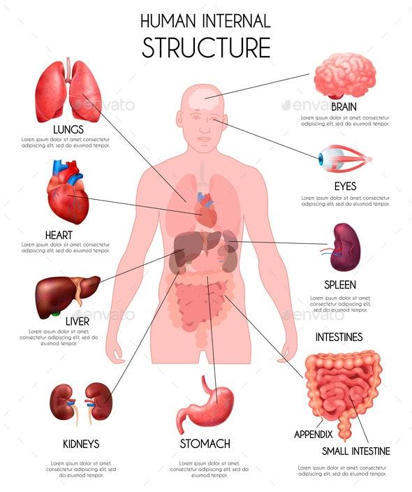 Đố bạn biết: Cơ thể người có bao nhiêu cơ quan nội tạng tất cả? - Ảnh 2.