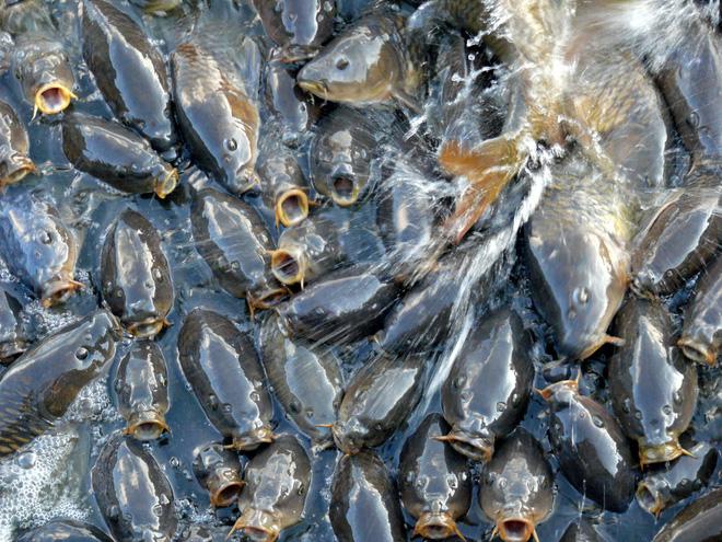 Cảnh tượng đàn cá bơi lúc nhúc gây sởn da gà, ngỡ chỉ xuất hiện trong phim kinh dị mà có thật ở hồ nước độc nhất vô nhị trên thế giới - Ảnh 5.