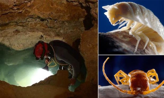 Khoa học đập hộp hang động tách biệt khỏi thế giới suốt 5 triệu năm, và đây là những gì được tìm thấy - Ảnh 1.