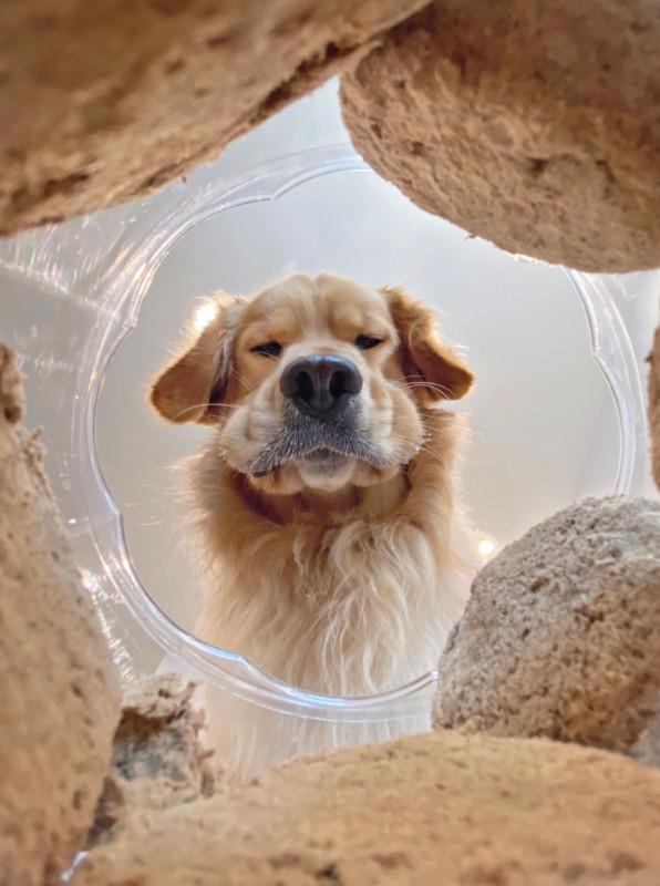 Cười nghiêng ngả với 14 bức hình thắng Giải nhiếp ảnh động vật hài năm 2020 - Ảnh 13.