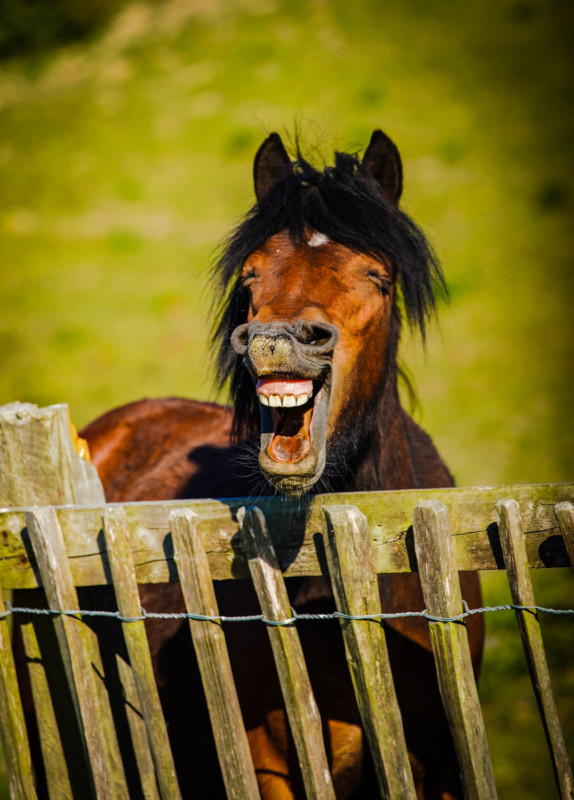 Cười nghiêng ngả với 14 bức hình thắng Giải nhiếp ảnh động vật hài năm 2020 - Ảnh 14.
