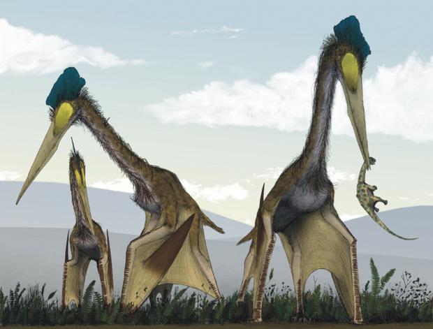 Choáng ngợp trước loạt ảnh những sinh vật khổng lồ nhất từng xuất hiện trên Trái đất khiến con người tự thấy mình chỉ là giống loài tí hon - Ảnh 13.