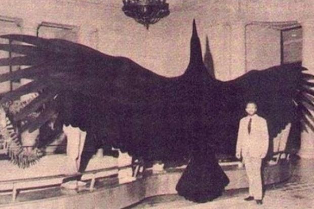 Choáng ngợp trước loạt ảnh những sinh vật khổng lồ nhất từng xuất hiện trên Trái đất khiến con người tự thấy mình chỉ là giống loài tí hon - Ảnh 5.