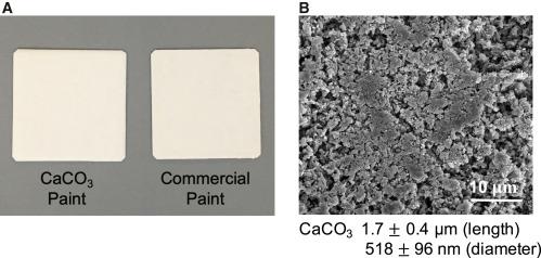 Khoa học tìm ra sơn siêu trắng đối trọng với Vantablack, ứng dụng hiệu quả trong làm mát nhà cửa - Ảnh 3.