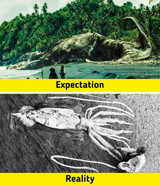 7 sinh vật huyền thoại tưởng chỉ có ở phim ảnh nhưng lại từng làm mưa làm gió Trái Đất trong quá khứ, nàng tiên cá cũng không ngoại lệ - Ảnh 1.