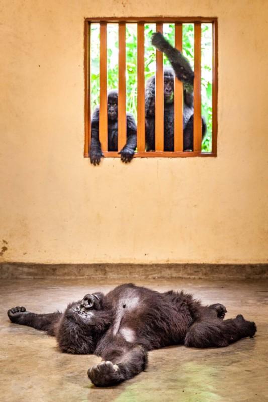 Ảnh Chú khỉ đeo mặt nạ người nhận giải Nhiếp ảnh gia thiên nhiên hoang dã của năm tại Châu Âu - Ảnh 8.