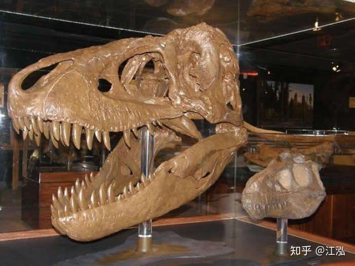 Cuộc đời của khủng long bạo chúa được chia thành 21 giai đoạn, hai trong số đó cực kỳ quan trọng và giúp chúng trở nên to lớn - Ảnh 3.