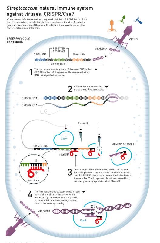 Nobel Hóa học 2020 gọi tên hai nữ khoa học gia phát minh công nghệ chỉnh sửa gen CRISPR/Cas9 - Ảnh 2.