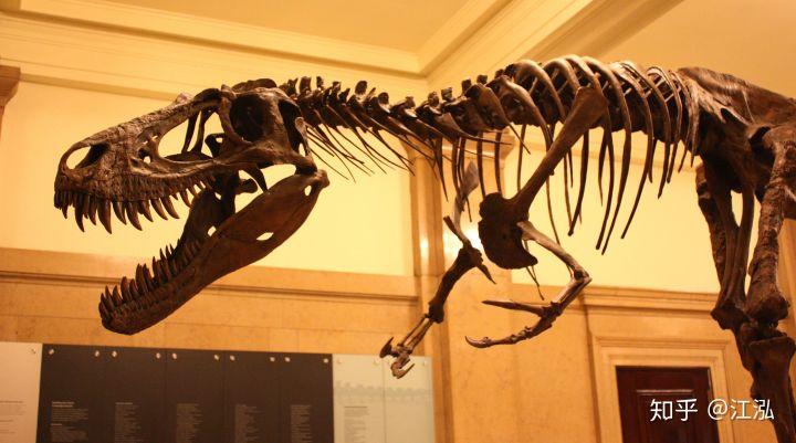 Cuộc đời của khủng long bạo chúa được chia thành 21 giai đoạn, hai trong số đó cực kỳ quan trọng và giúp chúng trở nên to lớn - Ảnh 9.