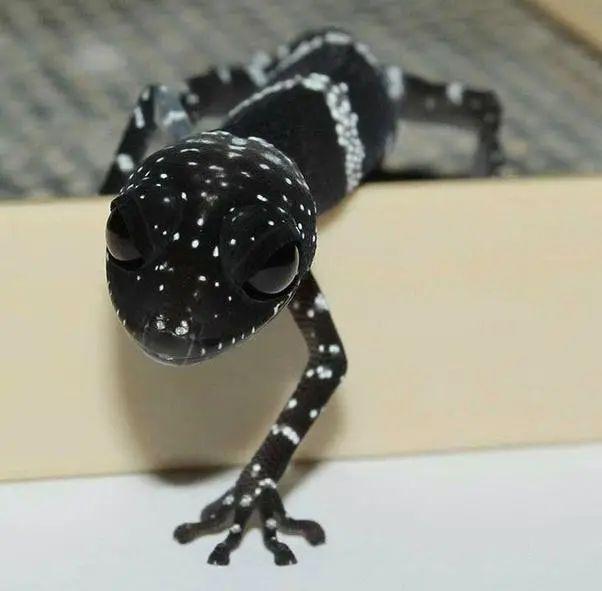 Những loài động vật nhìn thoáng qua có vẻ đáng sợ nhưng khi nhìn kỹ thì chúng lại đẹp mê hồn - Ảnh 10.