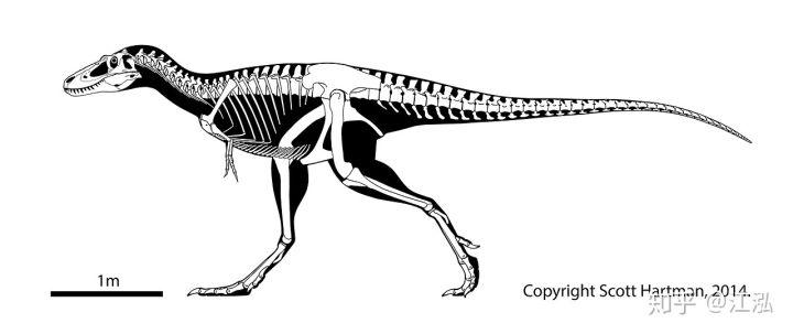 Cuộc đời của khủng long bạo chúa được chia thành 21 giai đoạn, hai trong số đó cực kỳ quan trọng và giúp chúng trở nên to lớn - Ảnh 10.