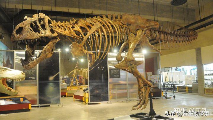 Cuộc đời của khủng long bạo chúa được chia thành 21 giai đoạn, hai trong số đó cực kỳ quan trọng và giúp chúng trở nên to lớn - Ảnh 6.