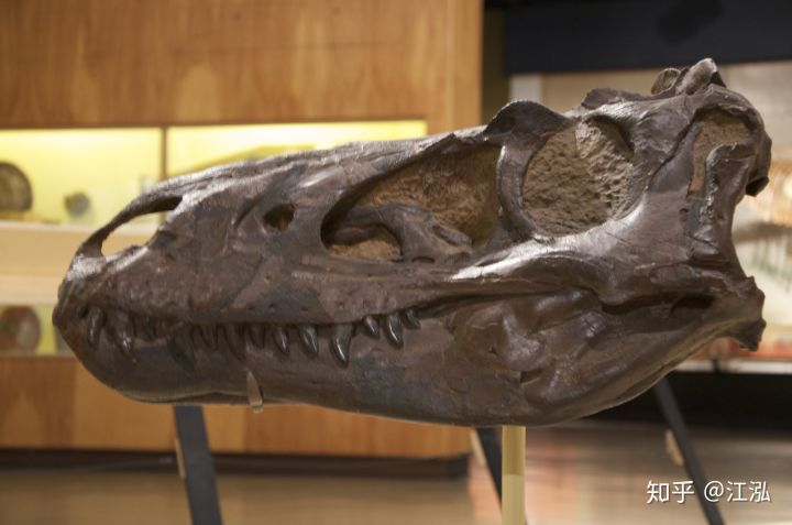 Cuộc đời của khủng long bạo chúa được chia thành 21 giai đoạn, hai trong số đó cực kỳ quan trọng và giúp chúng trở nên to lớn - Ảnh 8.