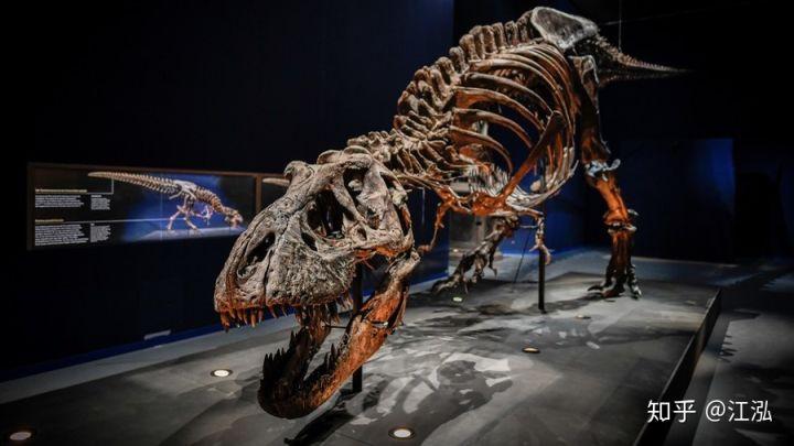 Cuộc đời của khủng long bạo chúa được chia thành 21 giai đoạn, hai trong số đó cực kỳ quan trọng và giúp chúng trở nên to lớn - Ảnh 5.
