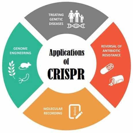 Một kỹ sư CRISPR giải thích tại sao công nghệ chỉnh sửa gen này xứng đáng đoạt giải Nobel Hóa học năm nay - Ảnh 5.