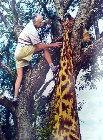 Số phận bi thảm của loài động vật bị gán cho biệt danh cột chống sét biết đi - Ảnh 7.