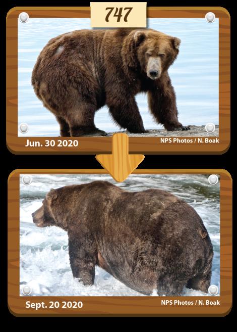 Đây là nhà vô địch rửng mỡ của cuộc thi Tuần lễ Gấu béo năm 2020 - Ảnh 2.