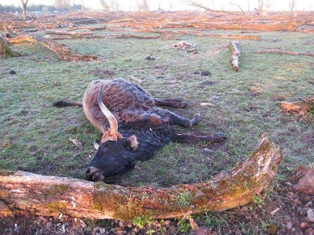 Tử địa giữa thiên đàng: Thí nghiệm phục hồi tự nhiên tại Hà Lan bỗng mang đến kết cục kinh hoàng chưa từng có, mùi vị chết chóc lan tỏa khắp nơi - Ảnh 9.