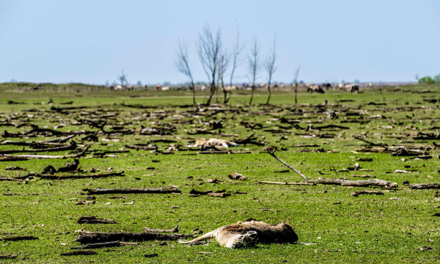 Tử địa giữa thiên đàng: Thí nghiệm phục hồi tự nhiên tại Hà Lan bỗng mang đến kết cục kinh hoàng chưa từng có, mùi vị chết chóc lan tỏa khắp nơi - Ảnh 10.