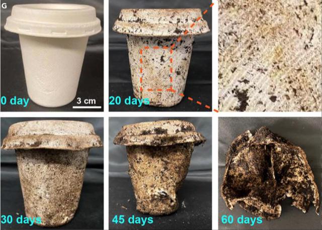 Cửa sáng cho việc bảo vệ môi trường: Hộp đựng thực phẩm làm từ tre và bã mía sẽ phân hủy sinh học trong 60 ngày - Ảnh 3.