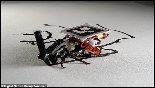Các nhà khoa học Nhật cấy ghép máy móc lên gián, bắt chúng phải phục vụ con người - Ảnh 1.