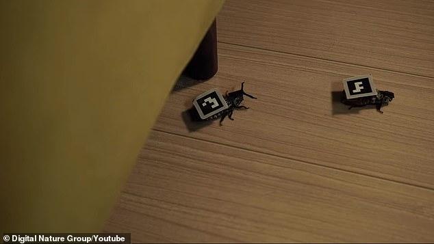 Các nhà khoa học Nhật cấy ghép máy móc lên gián, bắt chúng phải phục vụ con người - Ảnh 2.