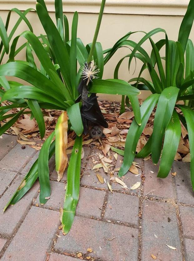 Bức ảnh này truyền tải thông điệp rằng cây cối đang bị đốn hạ quá mức, dẫn tới việc chú dơi này phải treo mình sát mặt đất như vậy