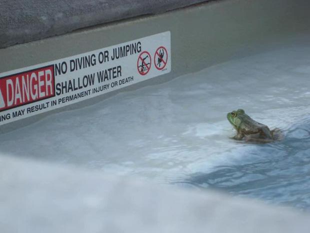 Khuôn mặt của chú ếch khi nhìn thấy tấm biển cấm nhảy và lặn xuống nước