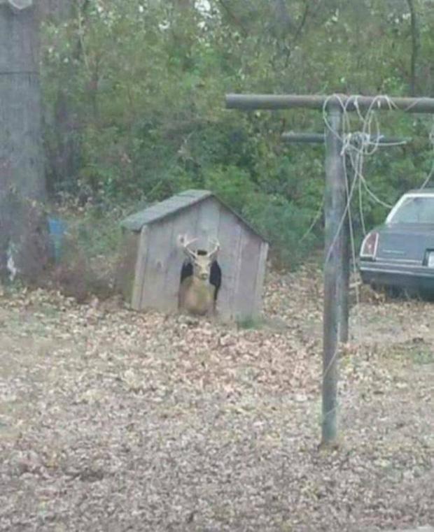 Không rõ mấy con chó sẽ nghĩ gì khi nhà của chúng bị tên ngỗ ngược này đánh chiếm