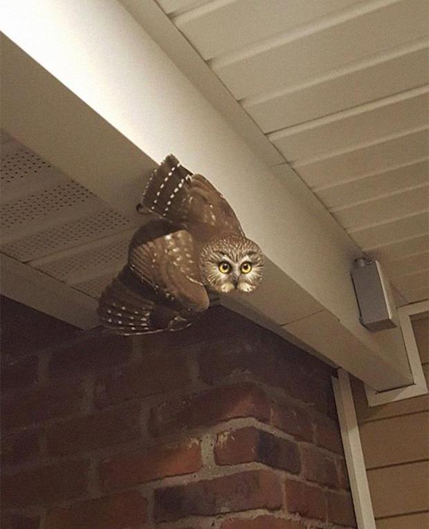 Thấy có tiếng gõ cửa, bước ra thì phát hiện vị khách lạ này