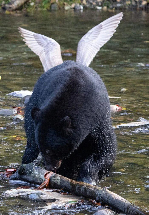 """""""Một thiên thần gấu ư?"""""""