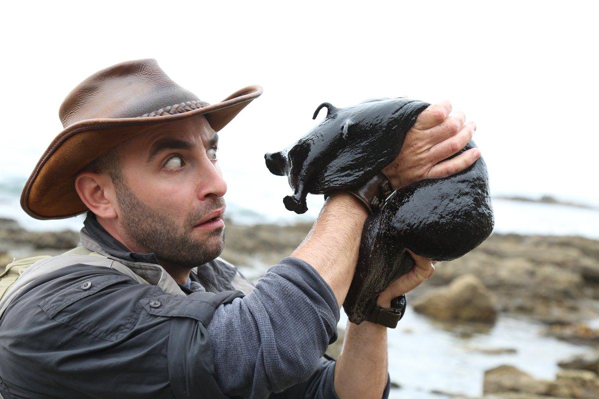 Phát hiện loài sên biển lớn nhất thế giới có vẻ ngoài giống như người ngoài hành tinh - Ảnh 2.