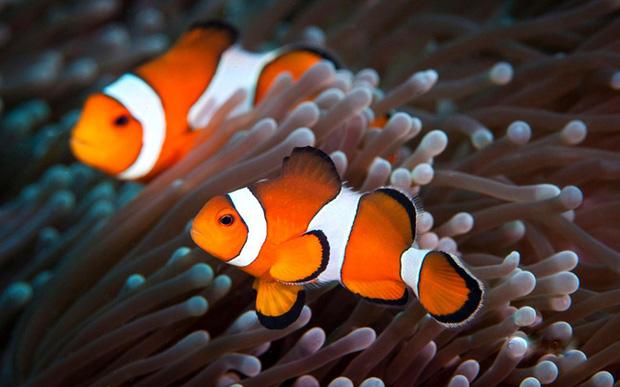 5 loài vật có khả năng chuyển giới linh hoạt từ đực sang cái tùy tình hình - Ảnh 1.