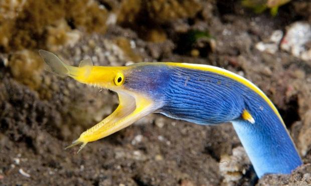 5 loài vật có khả năng chuyển giới linh hoạt từ đực sang cái tùy tình hình - Ảnh 4.