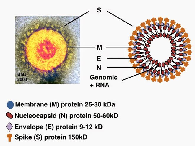 Cồn diệt virus corona như thế nào: Cách chọn nước rửa tay khô an toàn và hiệu quả nhất trong dịch Covid-19 - Ảnh 2.