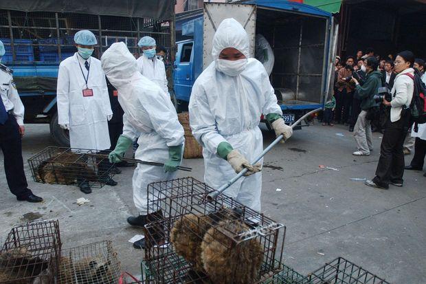 Trung Quốc đang nỗ lực xóa bỏ những khu chợ ẩm ướt để hạn chế tối đa dịch bệnh như thế nào? - Ảnh 22.