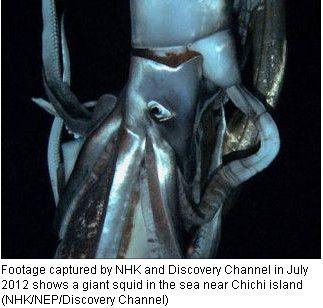 Quỷ khổng lồ Biển Bắc: Sinh vật có cùng kích thước với cá voi xanh có thể thực sự tồn tại ? - Ảnh 5.