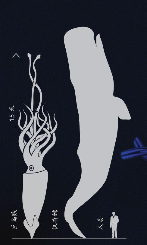 Quỷ khổng lồ Biển Bắc: Sinh vật có cùng kích thước với cá voi xanh có thể thực sự tồn tại ? - Ảnh 7.