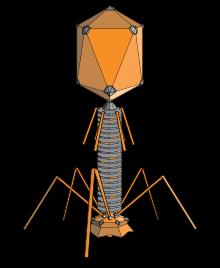 Khoa học phát hiện ra những con virus khổng lồ với khả năng ăn cắp đặc tính loài khác - Ảnh 2.