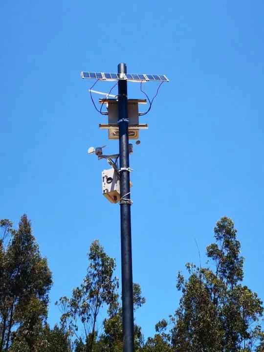 Chi-lê: Kiểm lâm lắp mũi kỹ thuật số trên cây cao để ngửi được mùi khói cháy rừng - Ảnh 2.