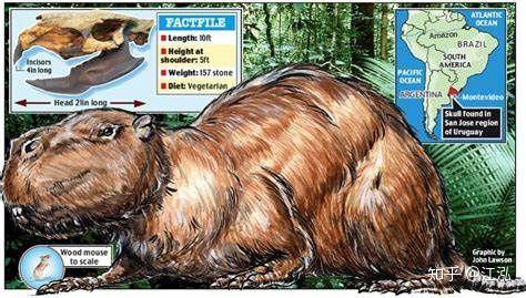 Loài chuột cổ đại lớn nhất từng tồn tại trên Trái Đất có thể đạt kích thước tương đương với một con bò tót - Ảnh 11.