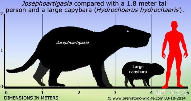 Loài chuột cổ đại lớn nhất từng tồn tại trên Trái Đất có thể đạt kích thước tương đương với một con bò tót - Ảnh 7.