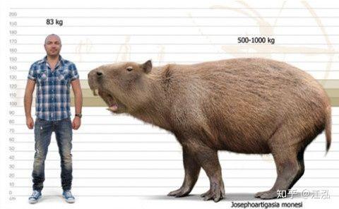 Loài chuột cổ đại lớn nhất từng tồn tại trên Trái Đất có thể đạt kích thước tương đương với một con bò tót - Ảnh 6.