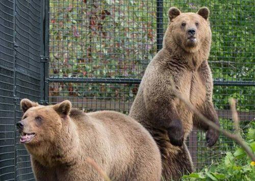 Biến đổi khí hậu nghiêm trọng đến nỗi gấu đang ngủ đông chợt tỉnh dậy sớm cả 2 tháng - Ảnh 1.