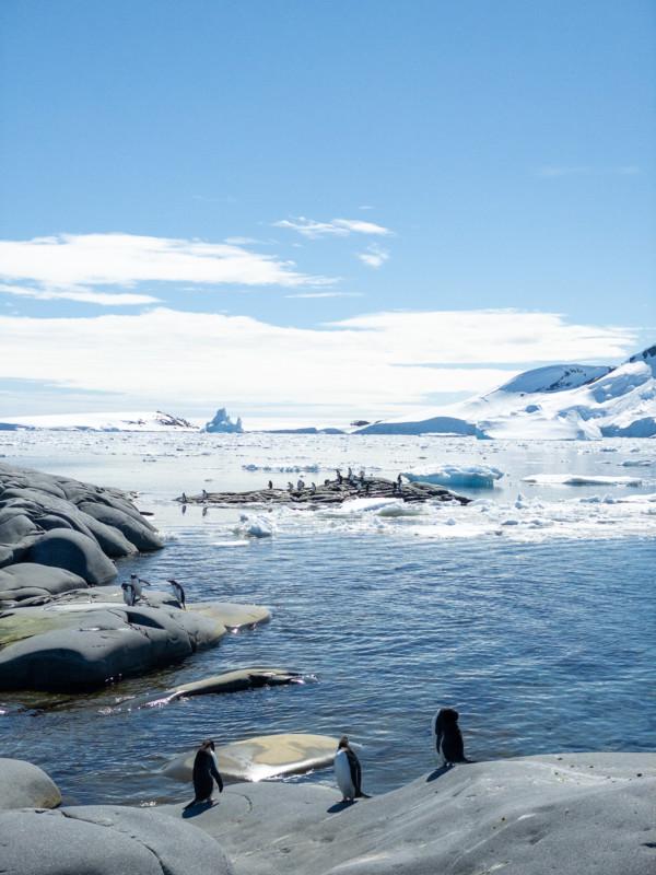 Đi tìm minh chứng về biến đổi khí hậu tại Nam Cực bằng một chiếc iPhone - Ảnh 9.