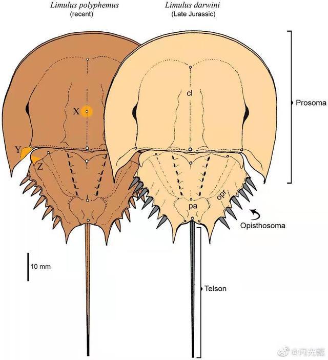 Tại sao một số sinh vật trở thành hóa thạch sống? - Ảnh 6.