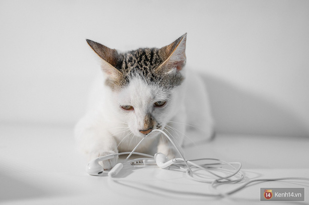Bị boss mèo cắn đứt vài lần mới thấy, hóa ra Tim Cook và Apple đã đúng khi đẩy mạnh xu hướng tai nghe không dây! - Ảnh 1.