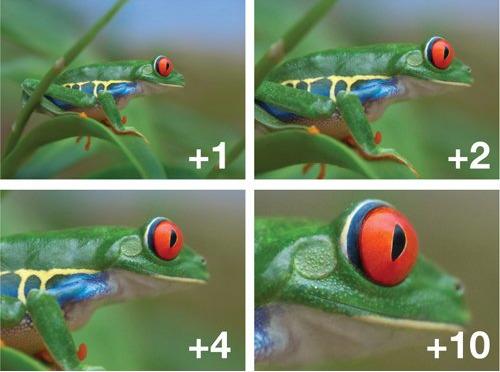 """Dùng thử filter chụp cận cảnh giá chỉ vài trăm nghìn đồng cho máy ảnh, sẽ ra sao nếu so với ống kính macro """"xịn sò"""" giá tới 20 triệu? - Ảnh 3."""
