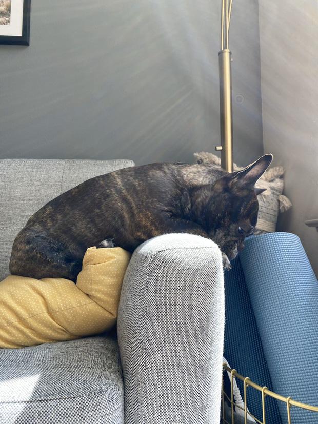Chú chó nổi tiếng MXH sau khi xuất hiện với biểu cảm buồn rười rượi vì không được ra ngoài chơi do lệnh phong tỏa Covid-19 - Ảnh 6.
