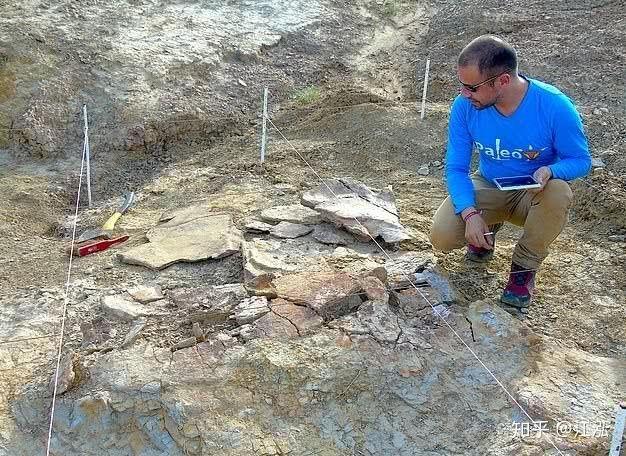 Phát hiện loài rùa cổ đại lớn nhất từng tồn tại trên Trái Đất - Ảnh 13.